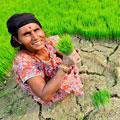 Introducción a la agricultura climáticamente inteligente